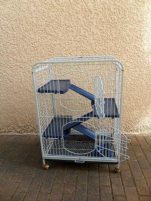 Combien de ratounes dans cette cage ? Sam_6010