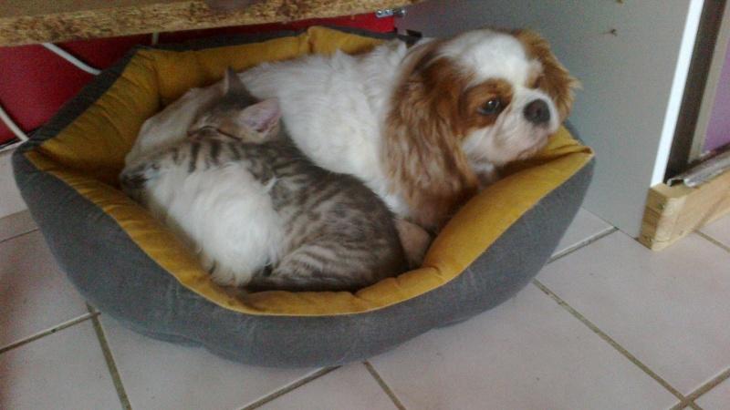 Présentation Cat amoureuse des 4 pattes  Boogie13
