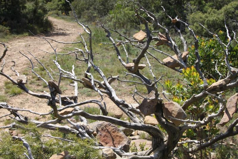 sentier sculpturel de Mayronnes (Aude) Img_9312