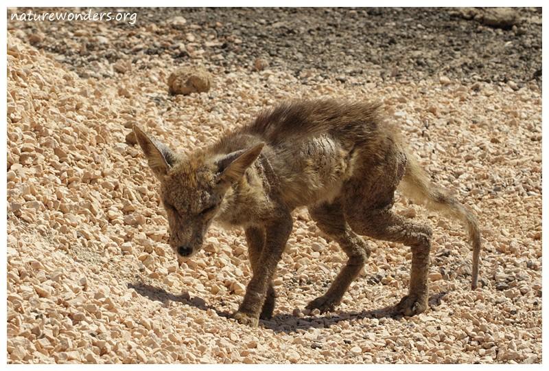 Les macs de la mignonnitude du règne animal - Page 2 20121110