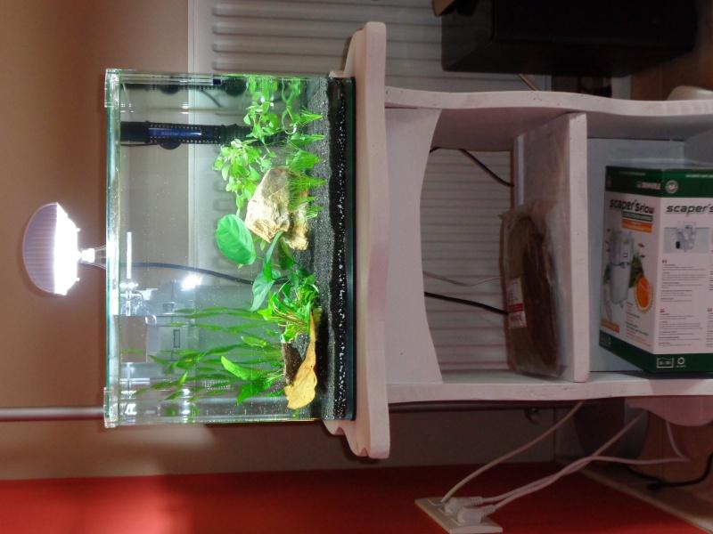 Scaper's tank pour mon betta!!! Dsc00816