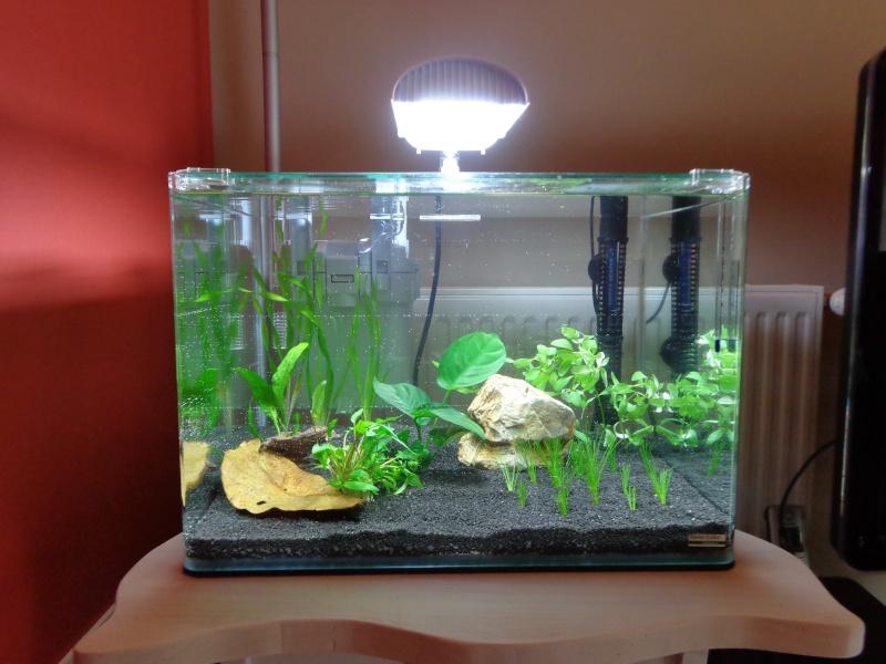 Scaper's tank pour mon betta!!! Dsc00817