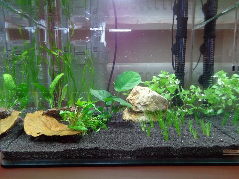 Scaper's tank pour mon betta!!! Dsc00818