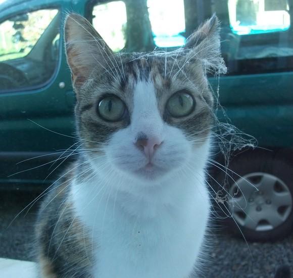 Quand mon chat fête halloween 2toile10