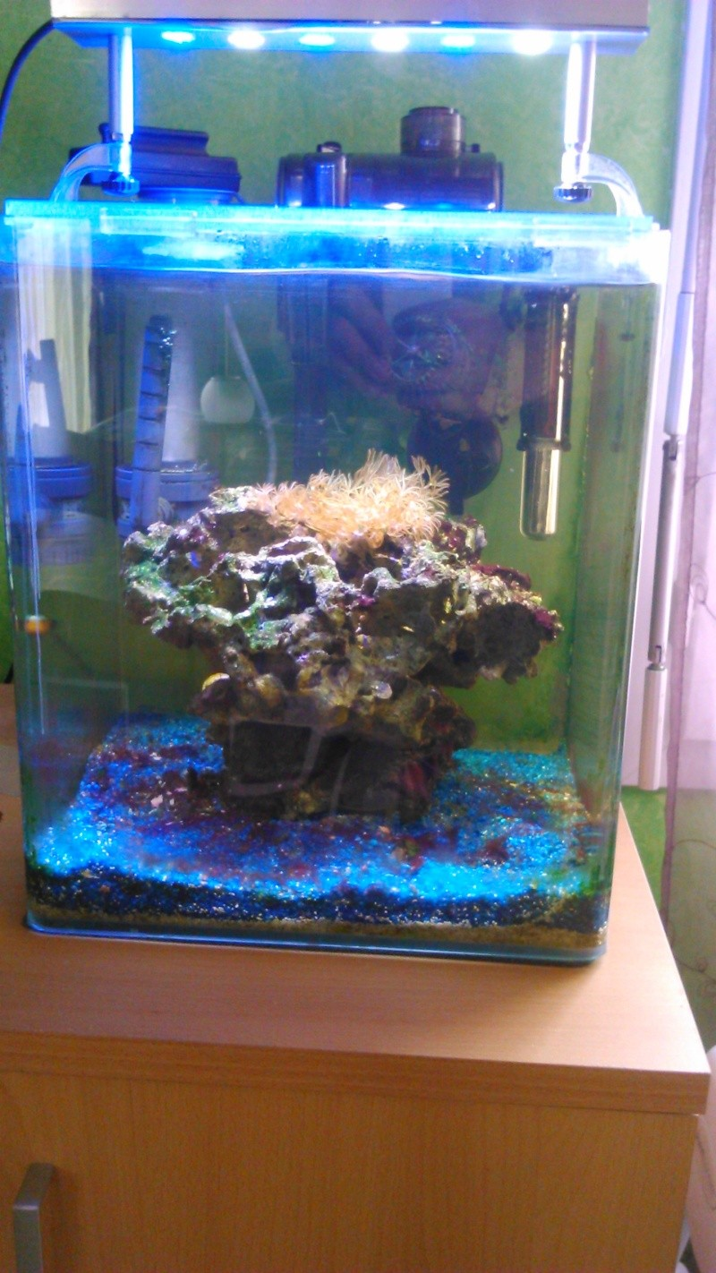 nano 30 litres Dsc_0015