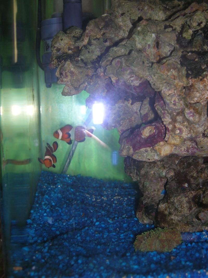 nano 30 litres Dscn3417