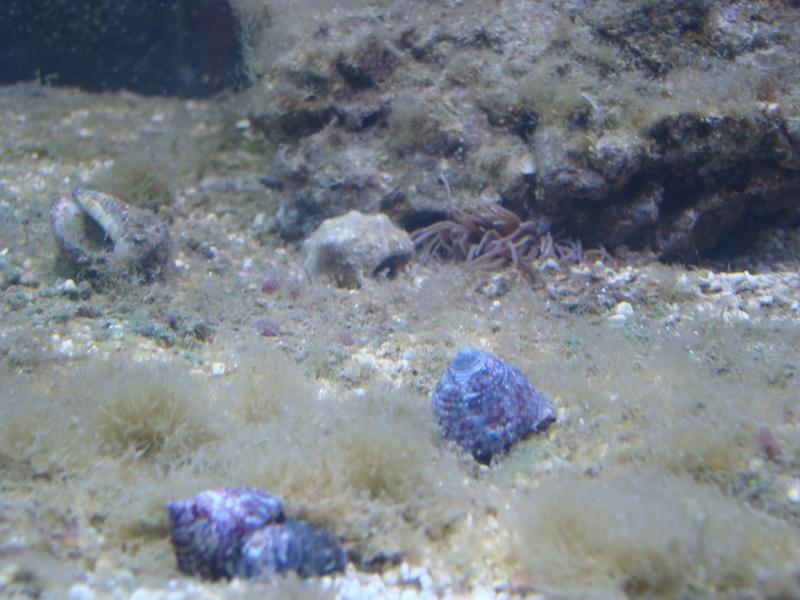 probleme algue et ph Dsc04614