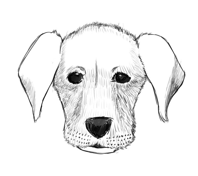 MQarts's not so amazing art Dog10