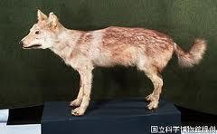 Clasificación de los lobos Lobo_d13