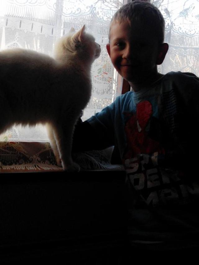 phoenix, mon chat adopté chez vous 14652511