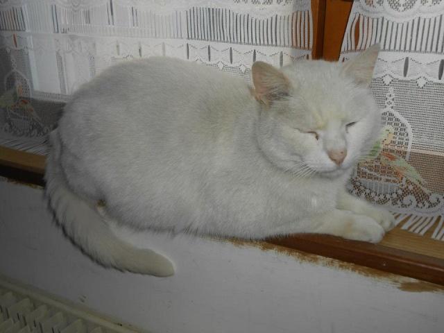 phoenix, mon chat adopté chez vous 48222310