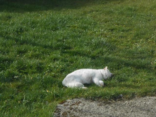 phoenix, mon chat adopté chez vous 55503910