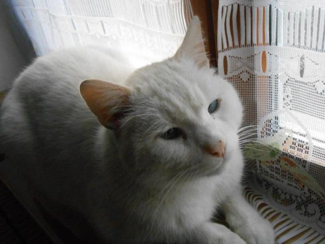 phoenix, mon chat adopté chez vous 60417610