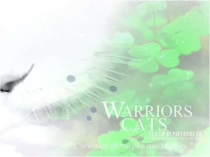 Warrior Cat - Echoes estompants