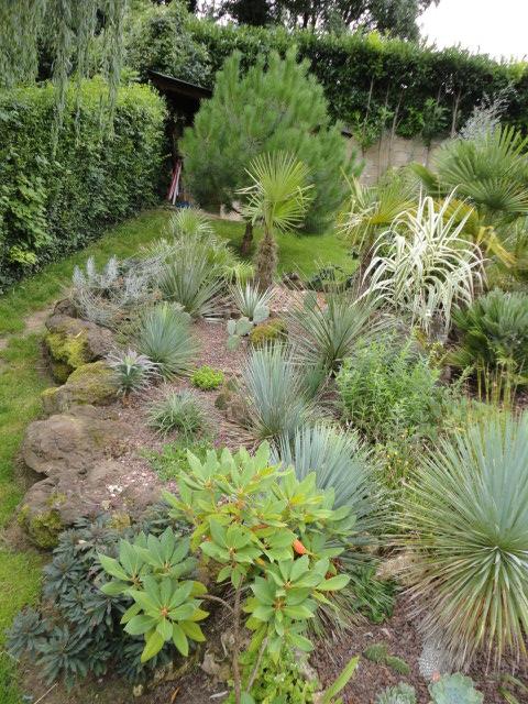 Petit jardin dans l'oise Dsc07314