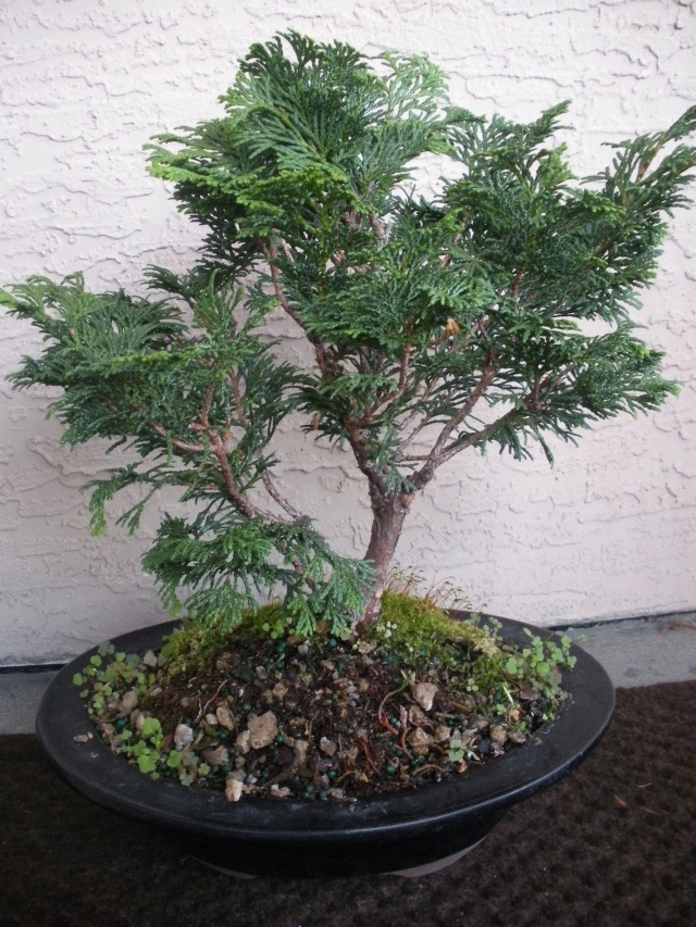 New to the forum!  My trees/progression Growing in SW Florida Dscn2421