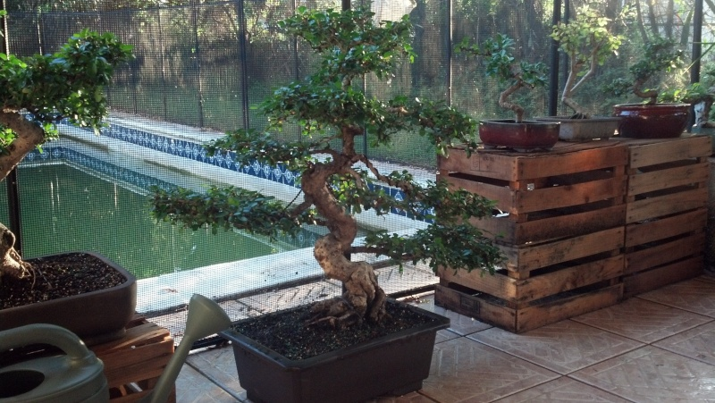 New to the forum!  My trees/progression Growing in SW Florida Img_2011