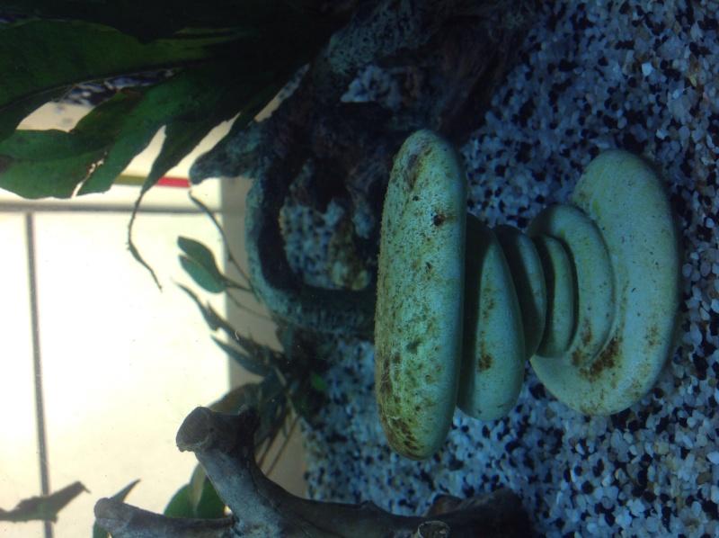 2 semaines de cyclage : algues Image34