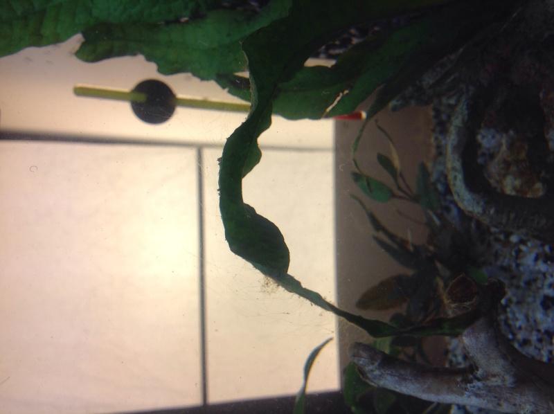 2 semaines de cyclage : algues Image35
