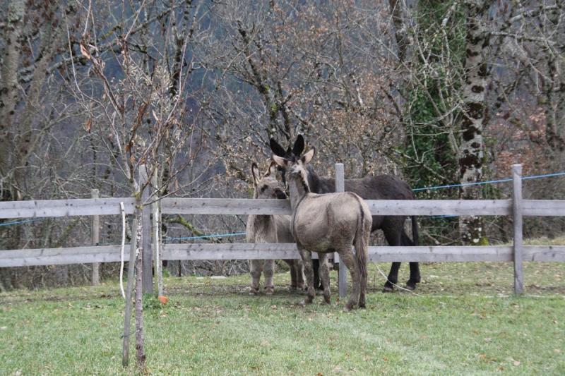 Dpt19 - YOUMIS âne commun adopté par Jean Vincent et sa femme (2013) 210