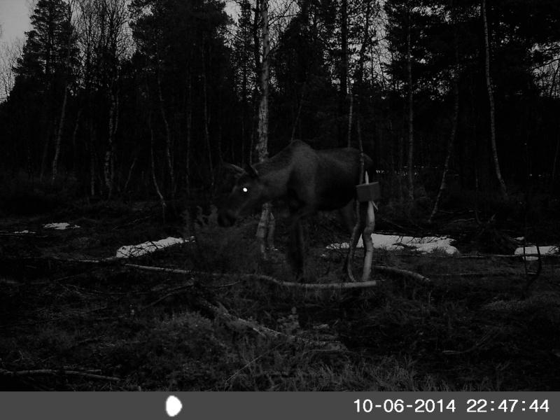Wildkamera 4 Sunp0017