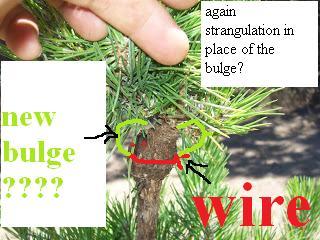 layering technique bonsai Again_11