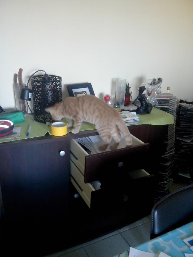 Risques liés au sevrage précoce du chaton - Page 3 Img_2017