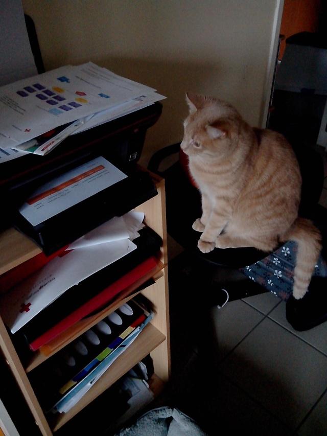 mon petit chaton  - Page 2 Img_2049