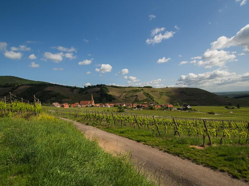 Le vignoble d'Ingersheim 11-05-14