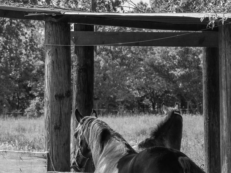Quelques photos de chevaux 8-05-113