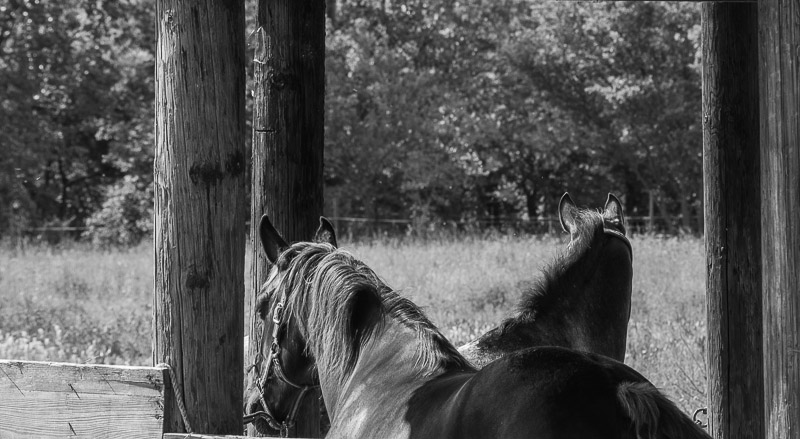 Quelques photos de chevaux 8-05-118