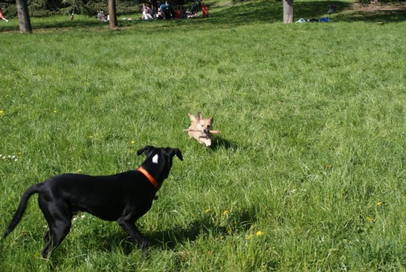 Ma petite chienne Tountoune 24807710