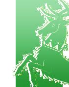 troisième année ♦ maison stags« LOST again »