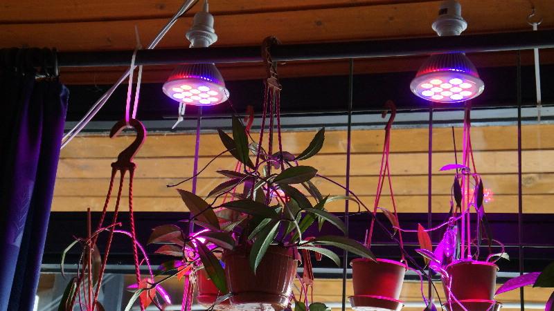LED Leuchten zur Überwinterung - Erfahrungen Dsc04010
