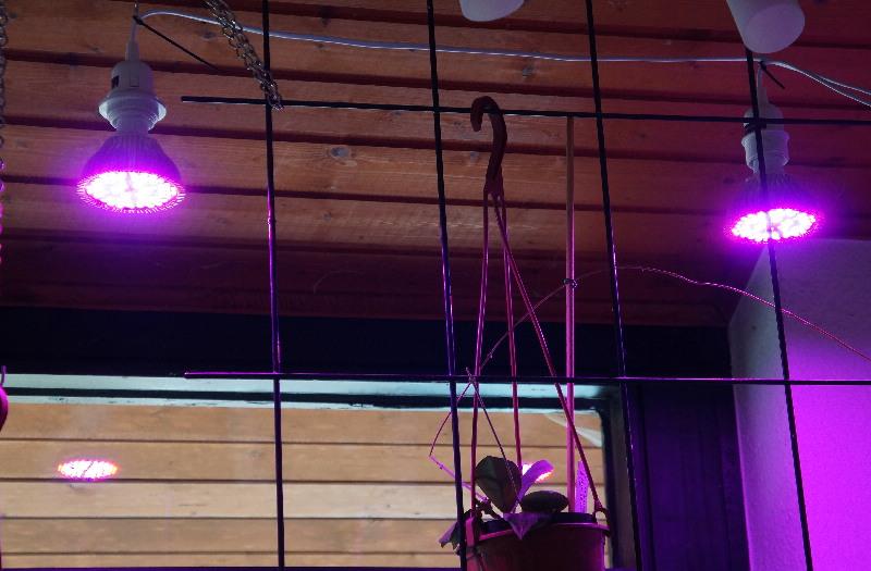 LED Leuchten zur Überwinterung - Erfahrungen Dsc04012
