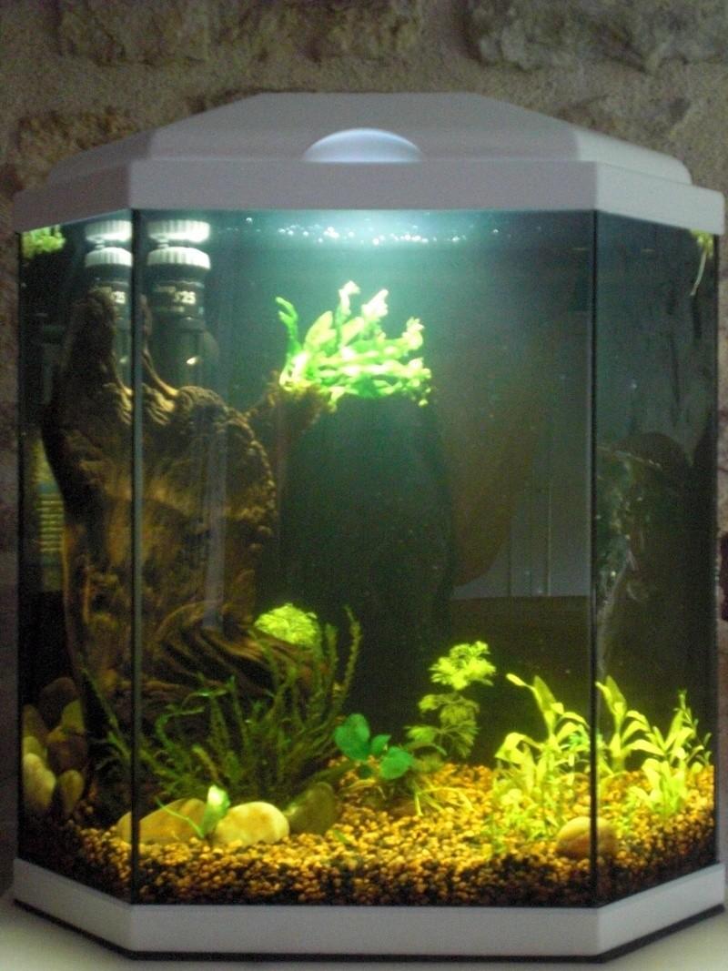 Aquarium 25L pour Betta Splendens Cimg3810