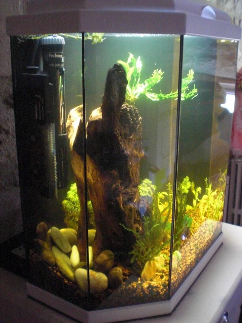 Aquarium 25L pour Betta Splendens Cimg3811
