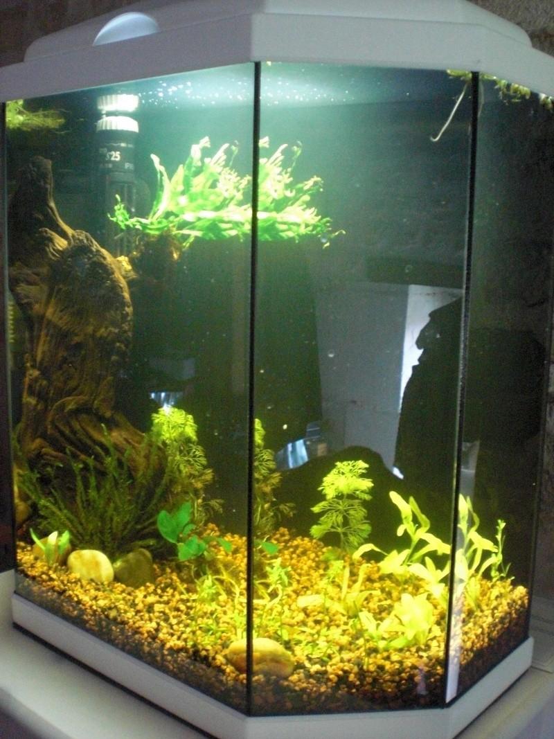 Aquarium 25L pour Betta Splendens Cimg3812