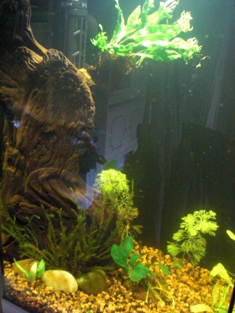 Aquarium 25L pour Betta Splendens Cimg3813