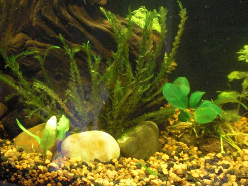 Aquarium 25L pour Betta Splendens Cimg3814