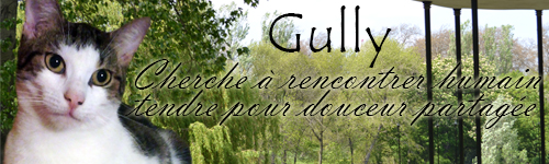 Toutes les bannières Gully-11