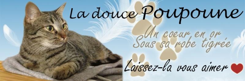 Toutes les bannières Poupou12