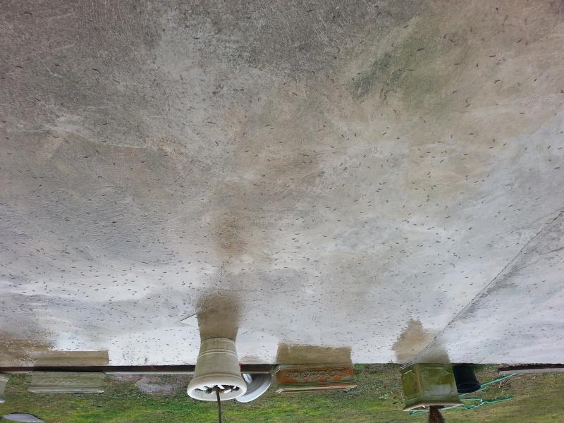 recherche désespérément nom et traitement contre insecte sur terrasse... 20140114