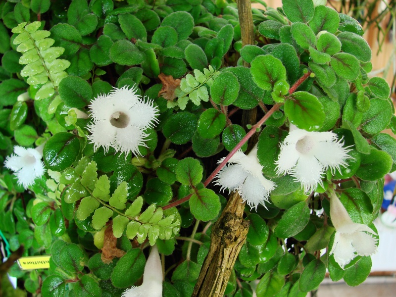 Weitere Begleitpflanzen Episci14