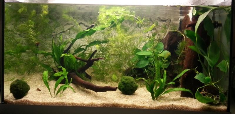 Aquarium de 60L pour betta 2014-010