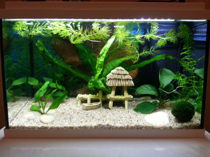 Nouvel aquarium en cycle 20140410