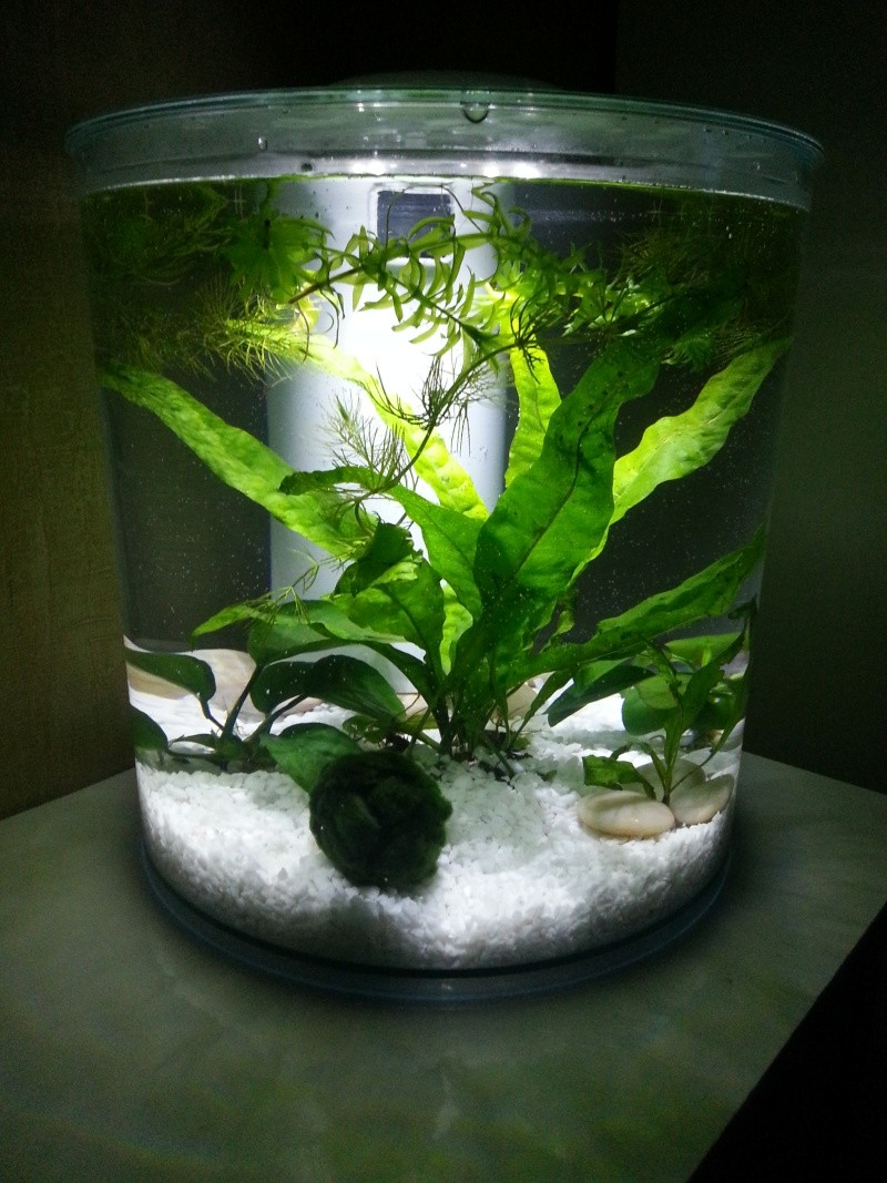 Nouvel aquarium en cycle 20140412