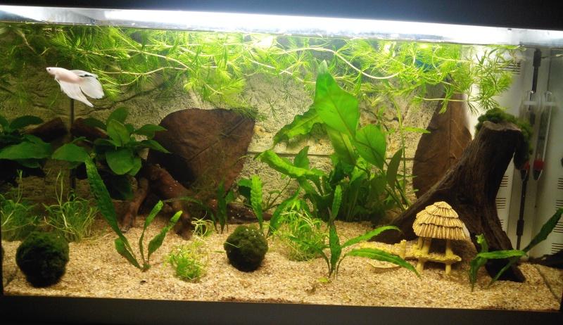 Aquarium de 60L pour betta - Page 2 Img_2012