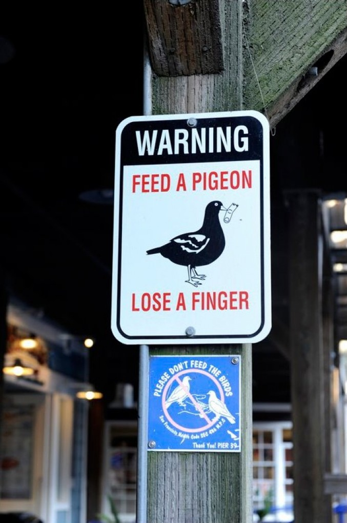 Les panneaux de signalisation les plus drôles du monde 316