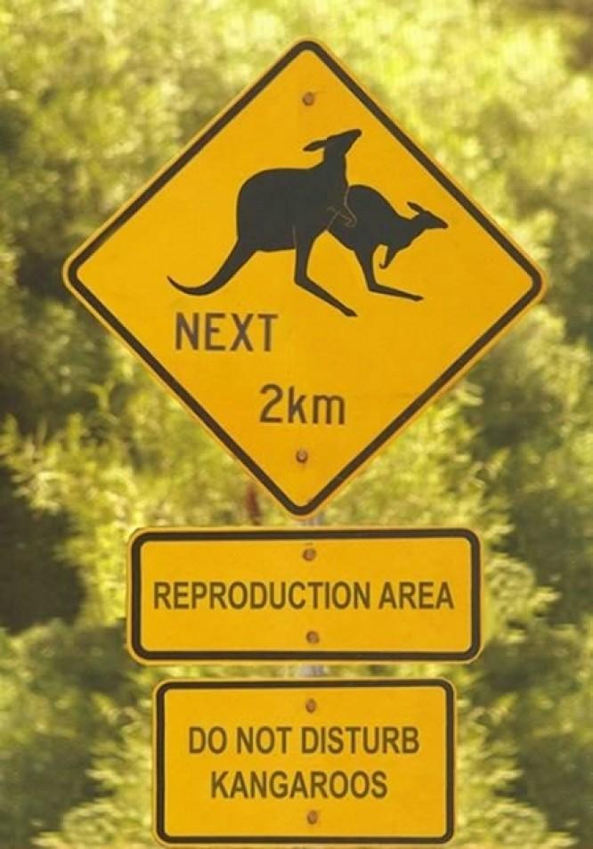 Les panneaux de signalisation les plus drôles du monde Kangro10